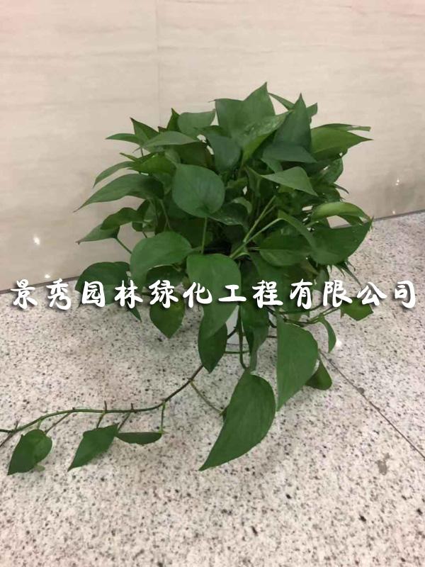 爱博诚信网投花木销售